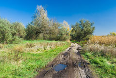 Dirty country road in fall season Royalty Free Stock Images