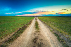 Dirty countryside sandy road in green wheat field Royalty Free Stock Images
