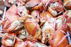 Dirty crabs covered in seasoning Royalty Free Stock Photo