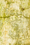 Dirty cracked grungy wall Royalty Free Stock Photos