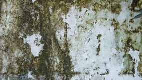 Dank wall background texture. Dirty dank wall background texture royalty free stock photos