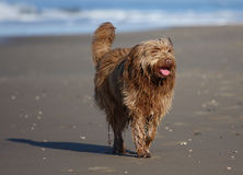 Free Dirty Dog Stock Photography - 12670762