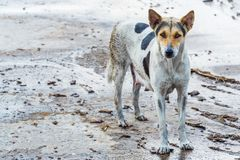 Dirty dog Royalty Free Stock Images