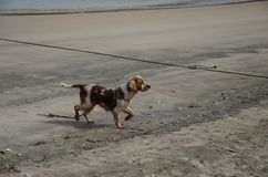 The pier and the dog. A dirty dog at the pier stock photography