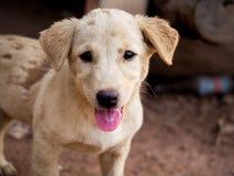 Dirty dog. Stock Photo