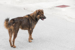 Dirty dog on the road. Royalty Free Stock Photos