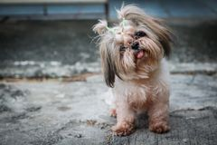 Dirty dog is smiling. And sitting on the floor Royalty Free Stock Photos