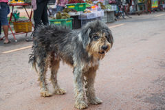 Dirty Dog standing at street market Royalty Free Stock Photography