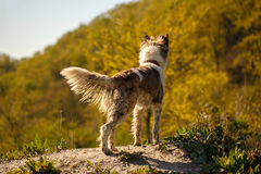 Dirty Dog Stands outdoors Royalty Free Stock Image