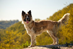 Dirty Dog Stands outdoors Royalty Free Stock Photo