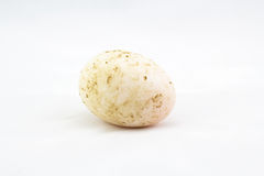 Dirty duck egg on white background. Picture royalty free stock photos
