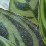Dirty dusty houseplant Royalty Free Stock Photos