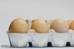 Dirty eggs in the tray. Dirty duck eggs in the tray on gray background. preparation for Easter Royalty Free Stock Images