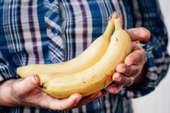 Dirty farmer hands holds yellow ripe banana fruit.  Royalty Free Stock Photo