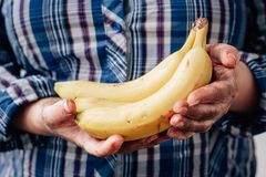 Dirty farmer hands holds yellow ripe banana fruit.  Stock Image