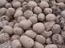 Dirty frozen rotting potatoes Stock Photography