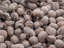 Dirty frozen rotting potatoes Royalty Free Stock Image