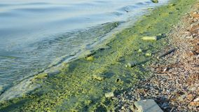 Dirty garbage on shore polluting our waters on concrete embankment. With green water from pollution stock footage