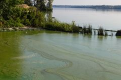 Toxic algae of water . Ecological catastrophy. Royalty Free Stock Images