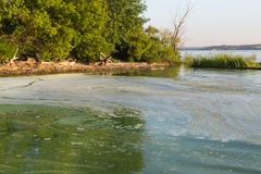 Dirty green water in the reservoir. Toxic algae. Stock Photography