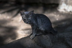 Dirty homeless cat Stock Images
