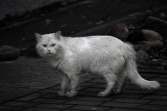Dirty homeless cat needs a help. Poor dirty homeless cat needs a help Stock Photography