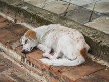 Dirty homeless dog Royalty Free Stock Photo