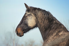 Dirty horse Royalty Free Stock Photo