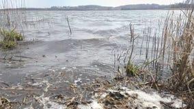 Dirty lake coast. Stock hd footage, global environmental crisis stock footage