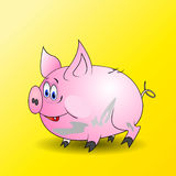 Dirty little pig Royalty Free Stock Images