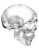Dirty Looking Skull In Black And White royalty free stock image