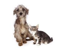 Dirty; messy; homeless; rescue; adopt; adoption; save; scared; l Stock Image