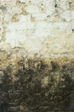 Dirty Mouldy Old Wall Stock Photos
