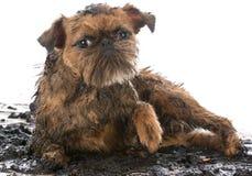 Dirty muddy dog Royalty Free Stock Photography