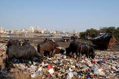 Dirty Mumbai Royalty Free Stock Photos