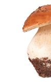 Dirty mushroom Stock Photography