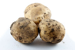 Dirty new potatoes Stock Photo