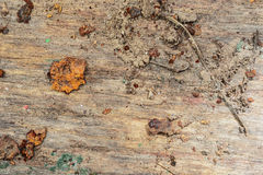 Dirty old board. Weathered wood. dirty old board - after exposure to rain, snow and dirt adhering Royalty Free Stock Image