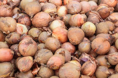 Dirty onions on a heap Stock Image