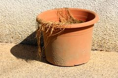 Dirty orange flower pot with dried plant in front of family house wall. On warm sunny spring day stock images