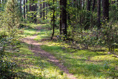 Dirty path. Small dirty path in a forest Stock Photography