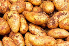 Dirty potatoes Royalty Free Stock Images
