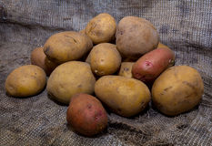 Dirty potatoes on burlap Royalty Free Stock Photo