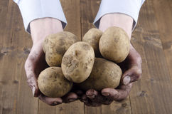 Dirty potatoes are held in hands Royalty Free Stock Photos