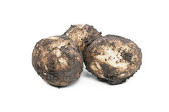 Dirty potatoes Stock Image