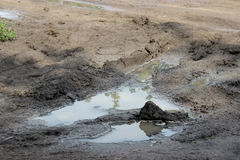 Dirty puddle on the country road Royalty Free Stock Photography
