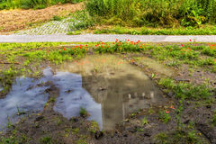 Dirty puddle in the forest with reflection of the beautiful popp Stock Photos