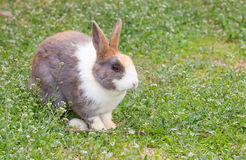 Dirty rabbit in garden Stock Image