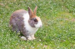 Dirty rabbit in garden Stock Image