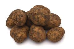 Dirty raw potato Stock Photo